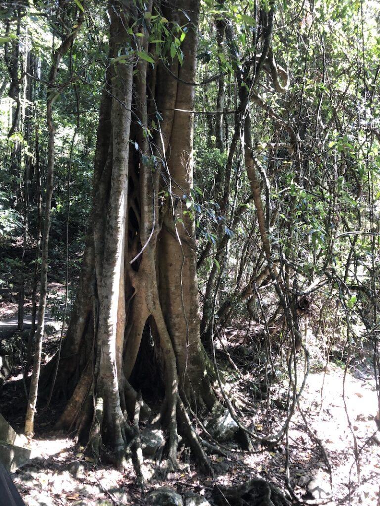 Tree with a secret door